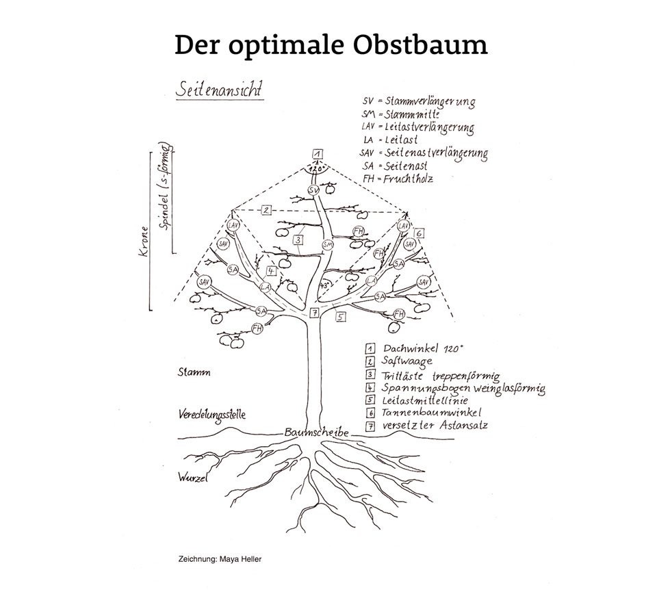 optimaler-obstbaum-collage-960