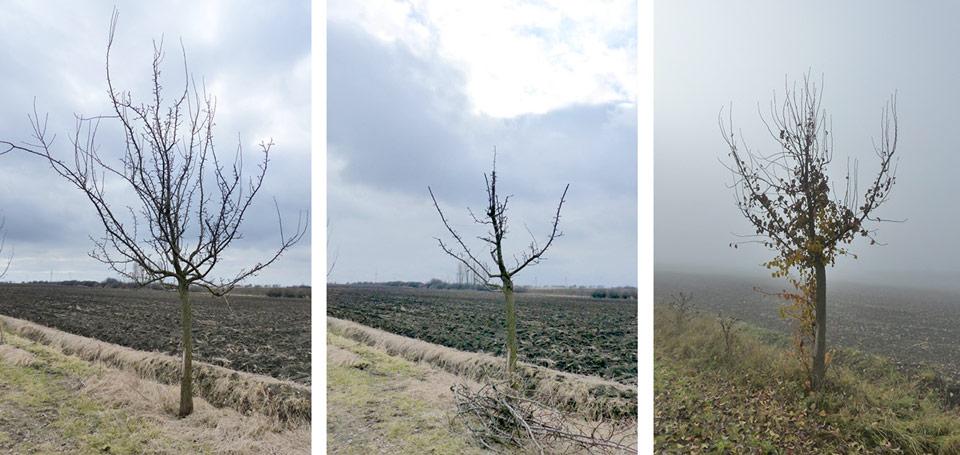 Beliebt Bevorzugt Birnenbaum schneiden - Obstbaumschnittschule &WZ_16