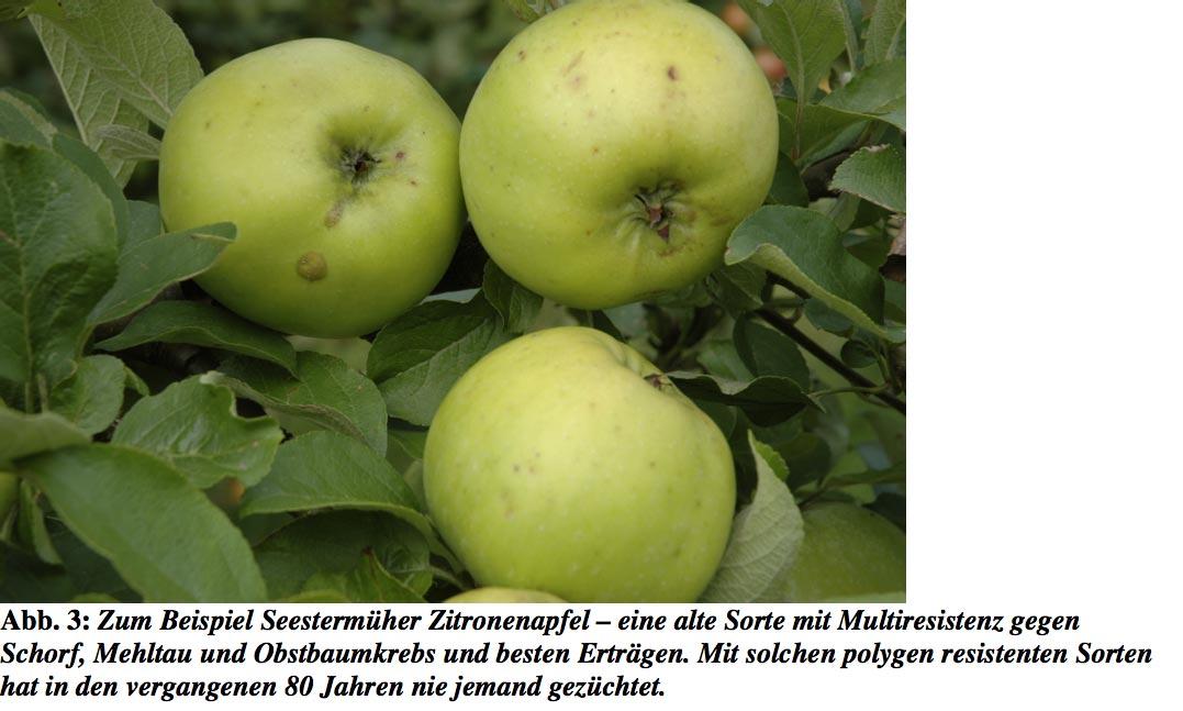 Seestermueher-Zitronenapfel